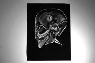 Skull drawn from observation